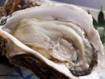 【夏限定】「海のミルク」と称される天橋立名物の大粒な岩牡蠣