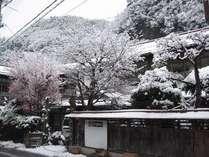 別館雪景色。雪に映える赤い枝は当館名物もみじ「珊瑚閣」。