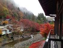 紅葉の見えるお部屋ございます。(別館2階・10月下旬)