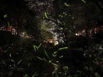 【蛍の夕べ】 ゆったりと蛍鑑賞 14:00IN/12:00OUT 22時間ロングステイ