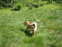 草原で遊ぶゴマちゃんです。鮮やかな緑が気持ちよさそうですね。