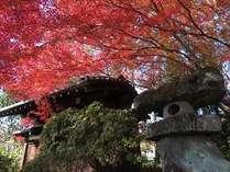当館、秋の日本庭園