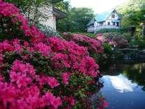 庭園】春の館内庭園の様子。離れ客室が連なる通路沿いに、5月になるとツツジが咲き誇ります!