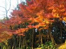 【柳生街道の紅葉】秋の散歩にオススメ。