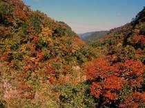九酔渓の紅葉は10月下旬~11月末が見頃