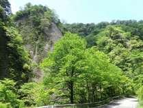 緑あふれる九酔渓