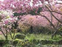 4月平日限定!ワンドリンクサービス付『桜咲く山暖簾へGO』プラン♪