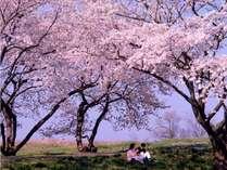 ☆彡春の早期割引プラン☆彡14日前までのご予約で通常料金の20%OFF!温泉&バイキングをお楽しみ下さい