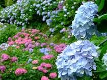 【6月特別・日本一のあじさい祭り送迎付きシンプル】価格控えめ懐石・露天風呂付き客室19hステイ