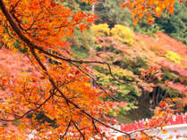 色鮮やかな紅葉に彩られる香嵐渓