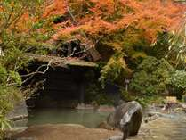 【紅葉】11月上旬~中旬頃が見頃。一味違う風景。混浴※24時間(20:00~22:00女性専用)