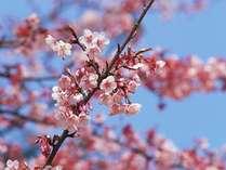 桜・春イメージ