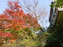 絶景の紅葉