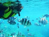 【シュノーケリング】沖縄にお越しなら、シュノーケリングでサンゴや熱帯魚の海を体感!