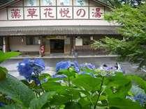 【梅雨】紫陽花の咲く(花悦の湯)