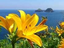 【観光6月】かんぞうの花と二ツ亀。大野亀からのベストショットです!