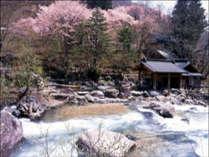 『摩訶の湯』春には桜が咲き、花見露天も楽しめます♪
