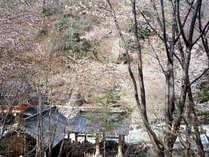 【外観】例年4月下旬~5月初旬に桜の見ごろを迎えます。