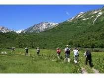 白馬連峰を目の前に標高1900mの大自然の中の栂池自然園