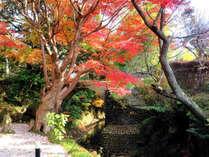 樹齢100年超の紅葉