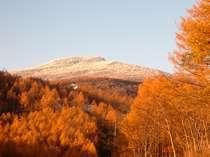 落葉松の黄葉と雪景色