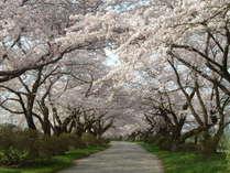 【桜観光におすすめ♪】北上展勝地・奥州市「桜の回廊」へアクセス抜群!春のお花見プラン♪