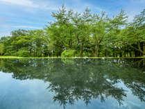 森がうつるNIWAの水盤