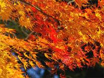★秋の紅葉プラン★養老渓谷の紅葉と秋グルメまるかじり!期間中は紅葉のライトアップ!