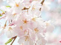 【春休みのファミリープラン】お子様料金が無料になる♪ファミリーで春休みは鴨川シーワールドへ!