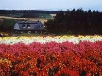四季彩の丘の花畑からのペンション麦