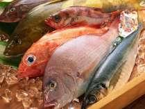 【ご当地贅沢バイキング☆市場直送】ピチピチの魚介類! ※イメージ画像