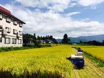 *湧水で育てた飯山産コシヒカリや自家栽培のお野菜を使用した料理を堪能下さい