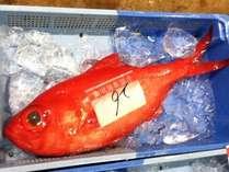 伊豆の海の至宝・金目鯛丸ごと一尾満喫プラン
