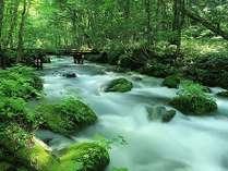 奥入瀬渓流から10分の宿です