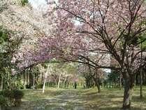 春日和プラン~桜便りと共に満喫♪称名コース(9品)海・山の幸でおもてなし。地産こしひかりをプレゼント