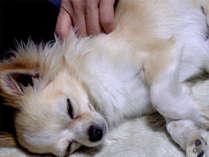 かわいいペットも一緒のお部屋でステイ♪(イメージ)