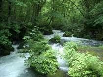 5月中旬~6月中旬の新緑が最高!奥入瀬渓流までお車で20分!