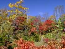 いろは隣接の自然公園~秋になると様々な木々が色付きます~