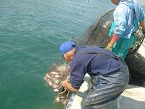 【こだわりの食材】宿でお出しするお魚は全て、島の漁師さんから直接買い付け。