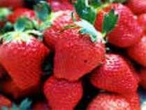 もぎって楽しい、食べて美味しい真っ赤な苺が食べ放題!一泊二食付プラン井頭御膳※チケット別売・特典付
