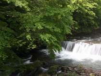 宿のすぐ横を流れる、藤木川清流。ここは6月上旬~中旬にホタルが見れます。