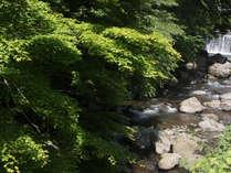 奥湯河原を流れる藤木側沿いは、京都の奥地・貴船や鞍馬を思わせるような風情が。
