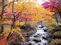 【11/16~12/8期間限定】熱海梅園もみじ祭りに行ってみよう!【1泊2食付き】