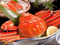 日本海、冬の味覚の王様 ズワイガニ