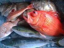 揚がる魚はその日次第!脂の乗った旬の魚を見極めます!