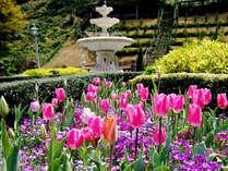 ガーデンに植えられているチューリップは5万球![アカオハーブ&ローズガーデン]