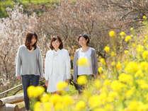 アカオハーブ&ローズガーデンでは梅や菜の花などが開花。ひと足早い春を体感♪