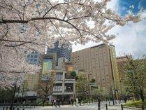 桜の季節のエドモント