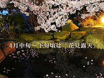 4月中旬頃~下旬頃には花見露天風呂をお愉しみいただけます♪庭や近隣の桜もキレイですよ~♪