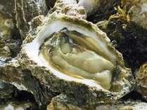 【*夏季限定*】≪生岩牡蠣≫付!ぷりっぷりの海のミルクを堪能♪